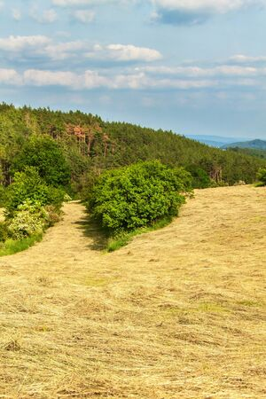 Freshly mowing meadows in the Czech Republic - Europe. Agricultural landscape. Summer day on the farm.