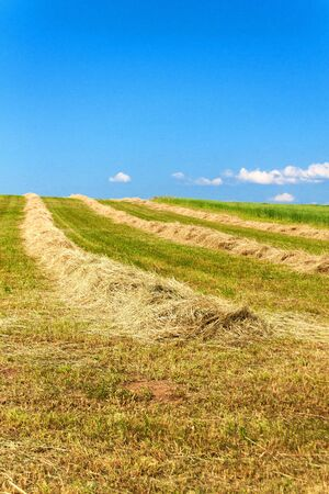 Haymaking on the field in the Czech Republic - Europe. Agricultural landscape. Hot summer day on the farm.