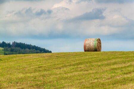 Dry Straw Bales on a Mown Meadow. Summer meadow in the Czech Republic. Working on an agricultural farm.