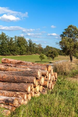 Cut pine logs by the roadside. Woodworking industry. Wood for ecological heating. Preparing for winter. Pile of wood.