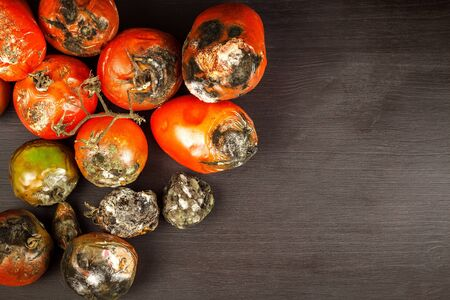 Moldy tomatoes. Storage of vegetables. Unhealthy food. Mold on vegetables. Spoiled food.