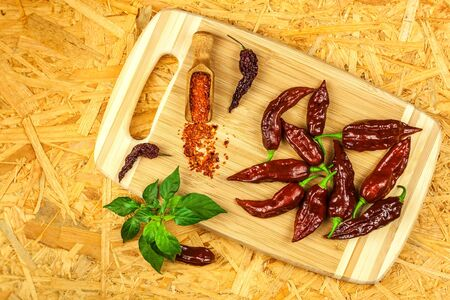 Fresh chilli peppers. Preparation of spicy food. Healthy spices. Extra hot chili pepper ( Capsicum Chinenses ) Bhut Jolokia Chocolate