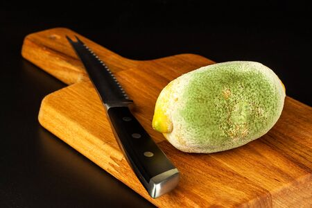 Moldy lemon on a kitchen board. Unhealthy food. Decayed fruit. Moldy food. Disease concept.