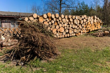 Wood stock for winter in the Czech countryside. Forest pine and spruce trees. Log trunks pile, the logging timber wood industry. Banque d'images