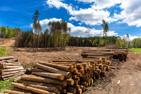 Forest slope after felling after attack by bark beetle. Deforestation. Cutted spruce forest in the Czech Republic - Europe. Climate change. Foto de archivo