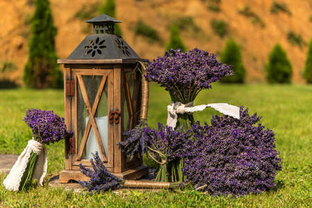 Lavender harvest. Freshly picked lavender on a green field and an old wooden lamp. Decoration from fragrant herbs