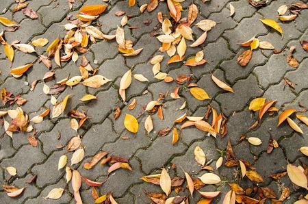 road autumnal: Fallen leaves on sidewalk