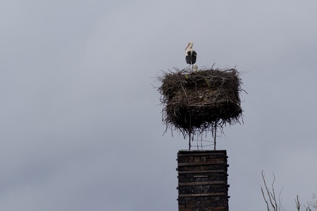 White stork in a nest on a chimney