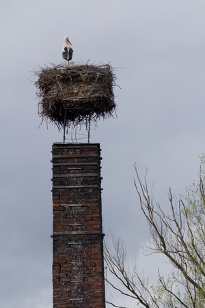 White stork in a nest on a chimney Stock Photo - 76748968