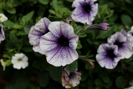 The dark purple centre of a light purple flower stock photo picture stock photo the dark purple centre of a light purple flower mightylinksfo