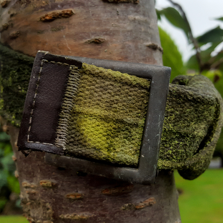 A fabric buckle wrapped around a tree trunk