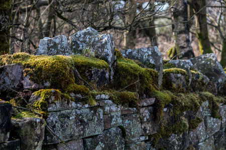 The green moss sitting on top of a stone wall