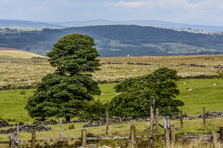 A couple of trees on the Lancashire moorland