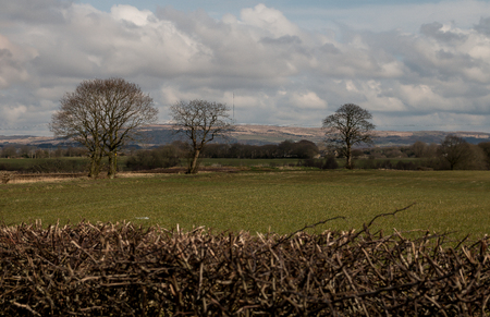 The brown hedgerow with Winter Hill in the background 写真素材