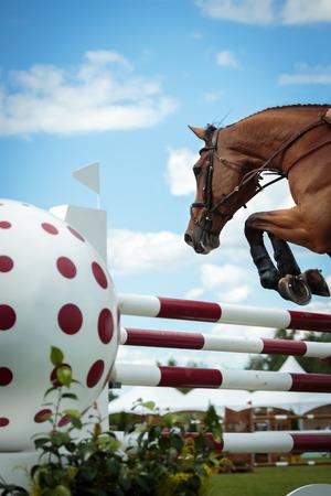 jumping fence: Deportes Foto de archivo
