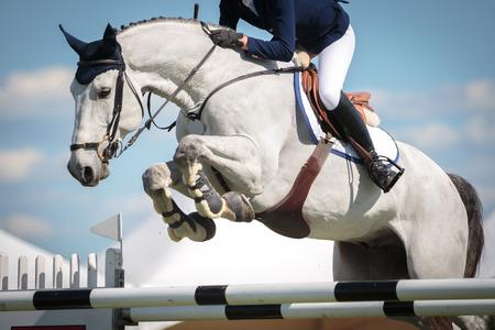 caballo: Deportes Ecuestres Foto de archivo