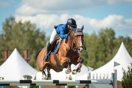 Sport Equestri Archivio Fotografico - 36201293
