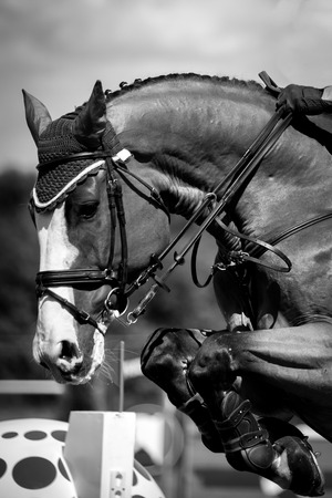 horses in field: Equestrian Sports