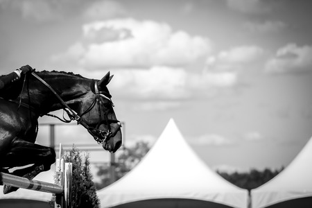 Paardensport Stockfoto