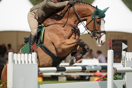 jockeys: Equestrian Sports