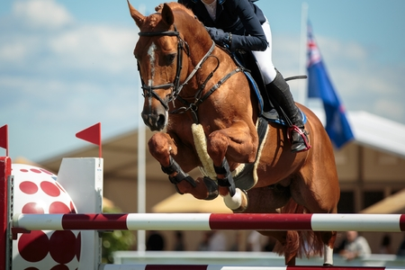 Equestrian Sports 版權商用圖片 - 38379056