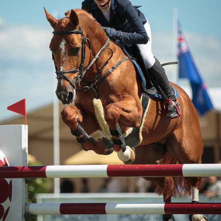 horse jumping: Equestrian Sports