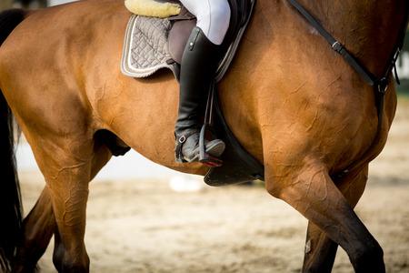 femme a cheval: Sports �questres Banque d'images