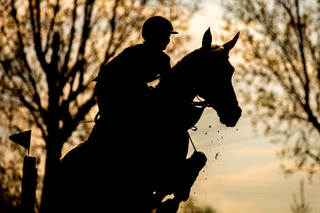 Sport Equestri Archivio Fotografico - 39643613