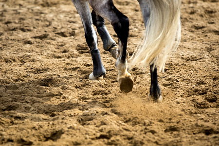 woman and horse: Equestrian Sports