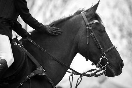 woman sport: Equestrian Sports
