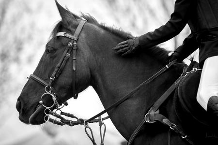 equitation: Equestrian Sports