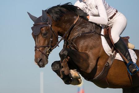 caballos negros: Deportes Ecuestres Foto de archivo