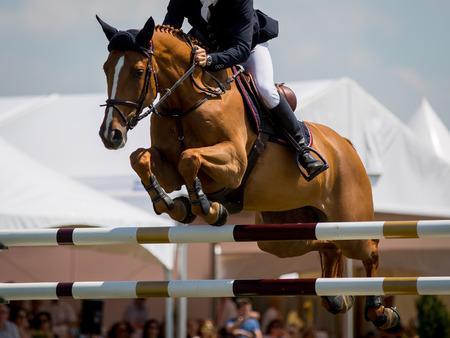 caballo saltando: Deportes Ecuestres Foto de archivo