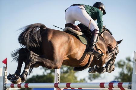cavallo che salta: Cavallo che salta, eventi equestri Archivio Fotografico