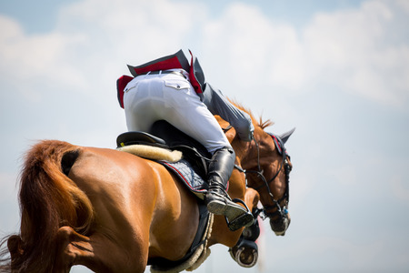 caballo saltando: Arte ecuestre, caballo de salto Eventos Foto de archivo
