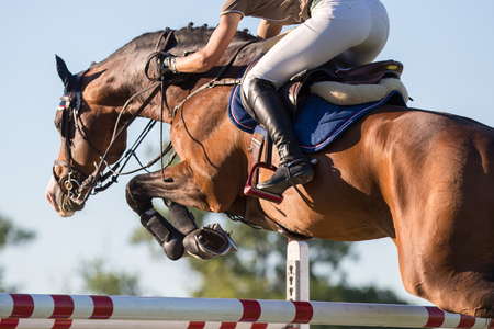 Equestrian Sports, Horse Jumping Events 免版税图像 - 58956282