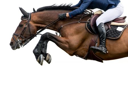 obstaculo: El salto del caballo, ecuestre, aislado en el fondo blanco Foto de archivo