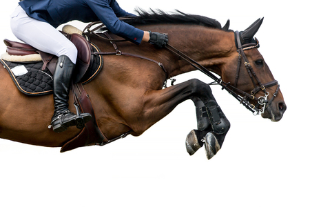 말 점프, 승마 스포츠, 흰색 배경에 고립