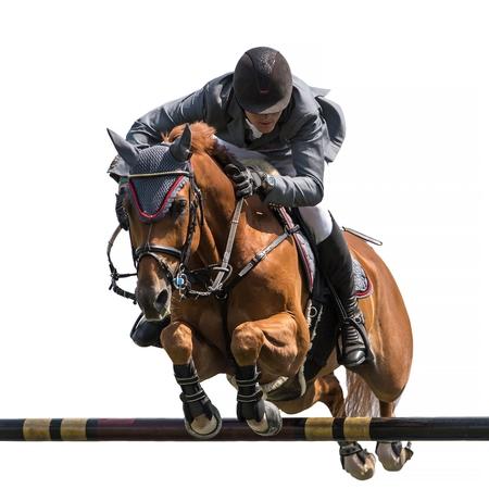 馬のジャンプ、白い背景で隔離の馬術競技スポーツ