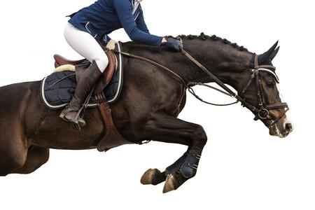 caballo saltando: El salto del caballo, ecuestre, aislado en el fondo blanco Foto de archivo