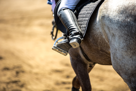 rise: Equestrian Sports, Horse Jumping, Horse Racing themed photo