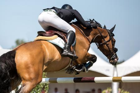 ippica: Equestrian Sports, Cavallo Saltare, Ippica foto a tema