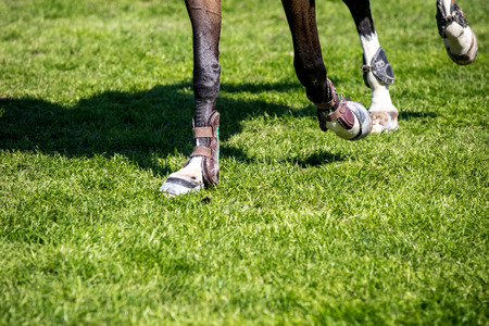 caballo saltando: Equestrian Sports, Horse Jumping, Horse Racing themed photo