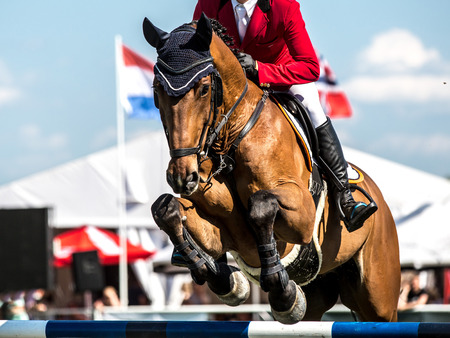 cavallo che salta: Equestrian Sports, Cavallo Saltare, Ippica foto a tema
