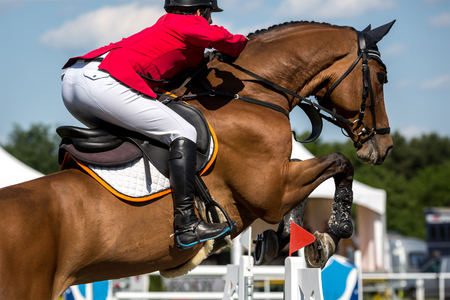 hurdle: Equestrian Sports, Horse Jumping, Horse Racing themed photo