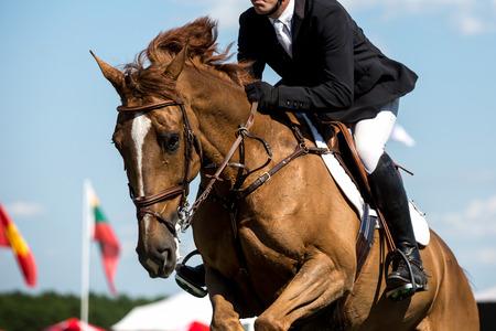 caballo saltando: Ecuestre, caballo de salto, la carrera de caballos foto temática