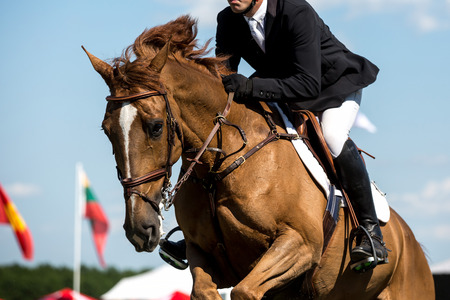 equitation: Equestrian Sports, Horse Jumping, Horse Racing themed photo