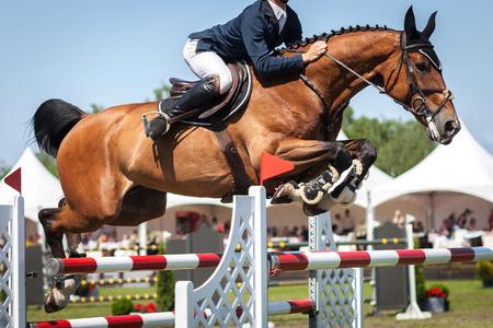 cavallo che salta: Sport Equestri, Ippico, Salto ostacoli, equitazione foto a tema Archivio Fotografico