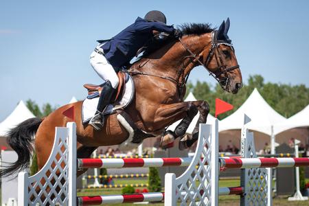 jumping fence: Deporte ecuestre, caballo de salto, muestre el salto, Hípica foto temática