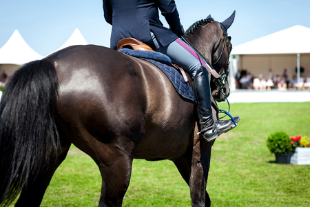 horse show: Equestrian Sports, Horse jumping, Show Jumping, Horse Riding themed photo Stock Photo
